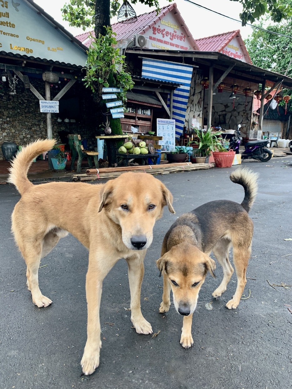 Friendly dogs Kep Cambodia.