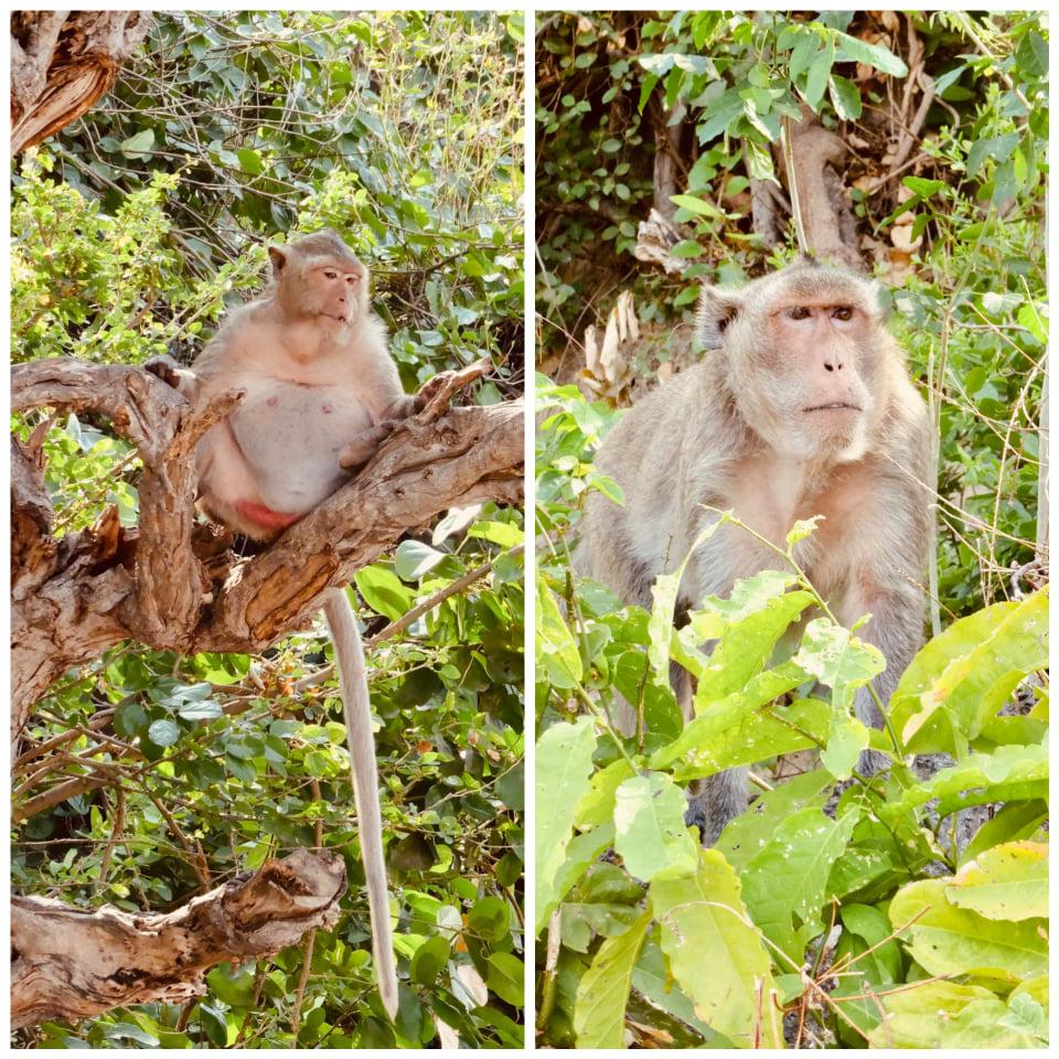 Monkey business Phetchaburi Thailand