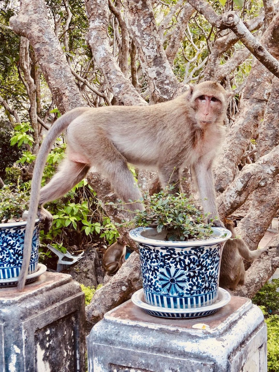 Monkey business in Phetchaburi.