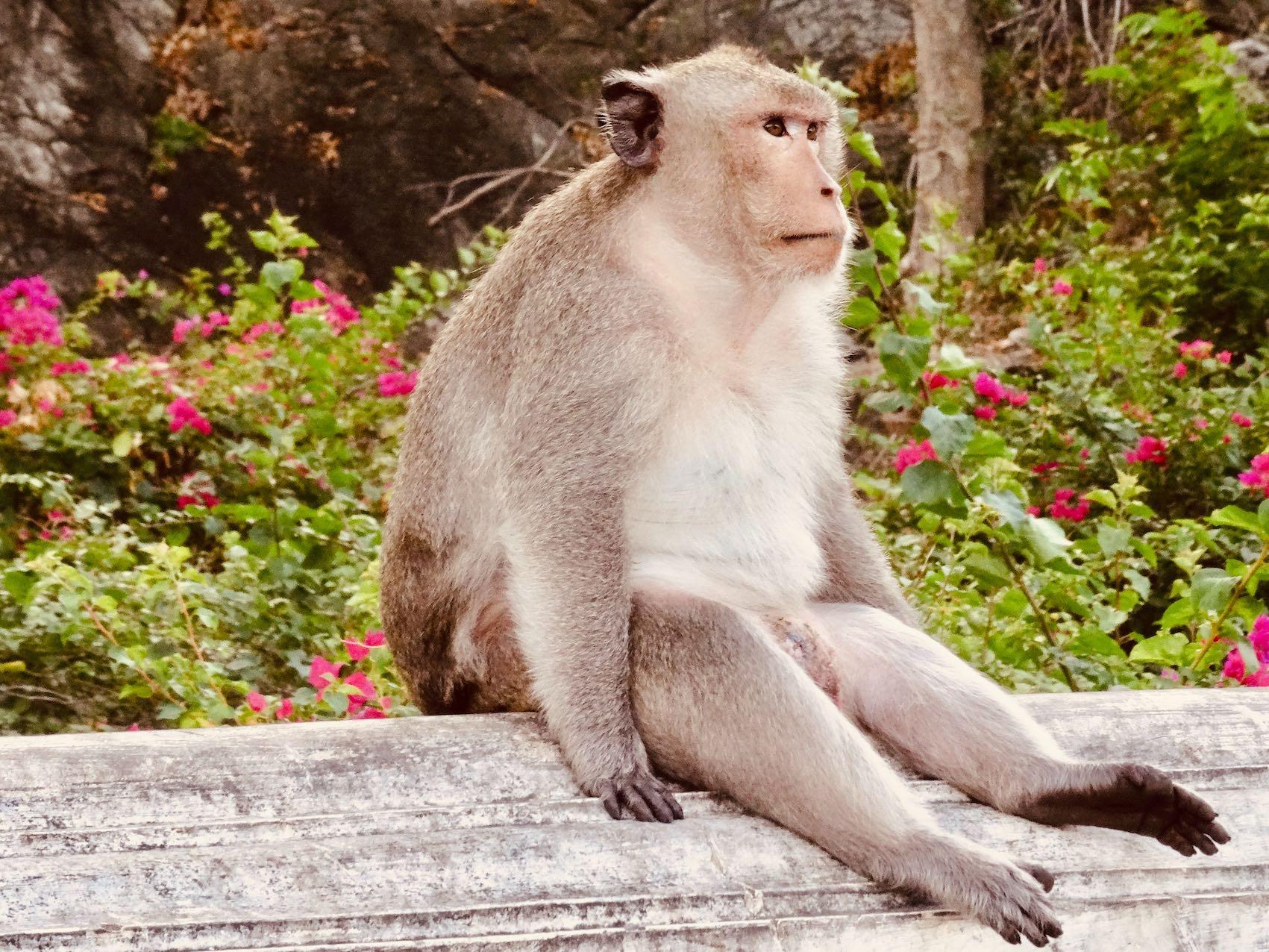 Phetchaburi Thailand the Monkey city