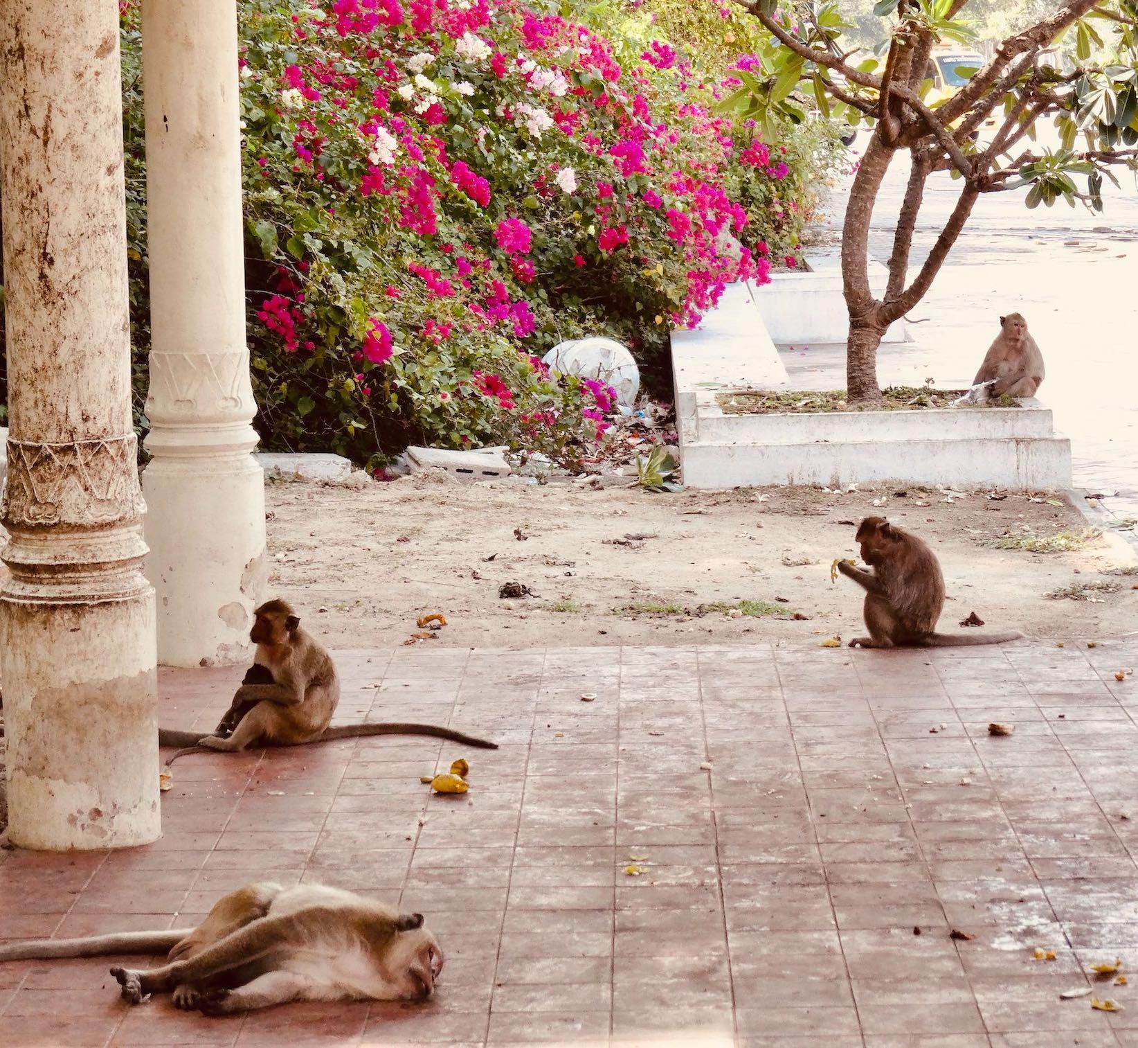 The monkeys of Phetchaburi.