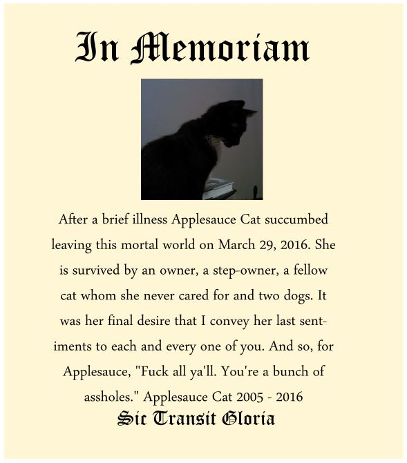 In Memoriam a Funeral for a Cat Nashville Tennessee