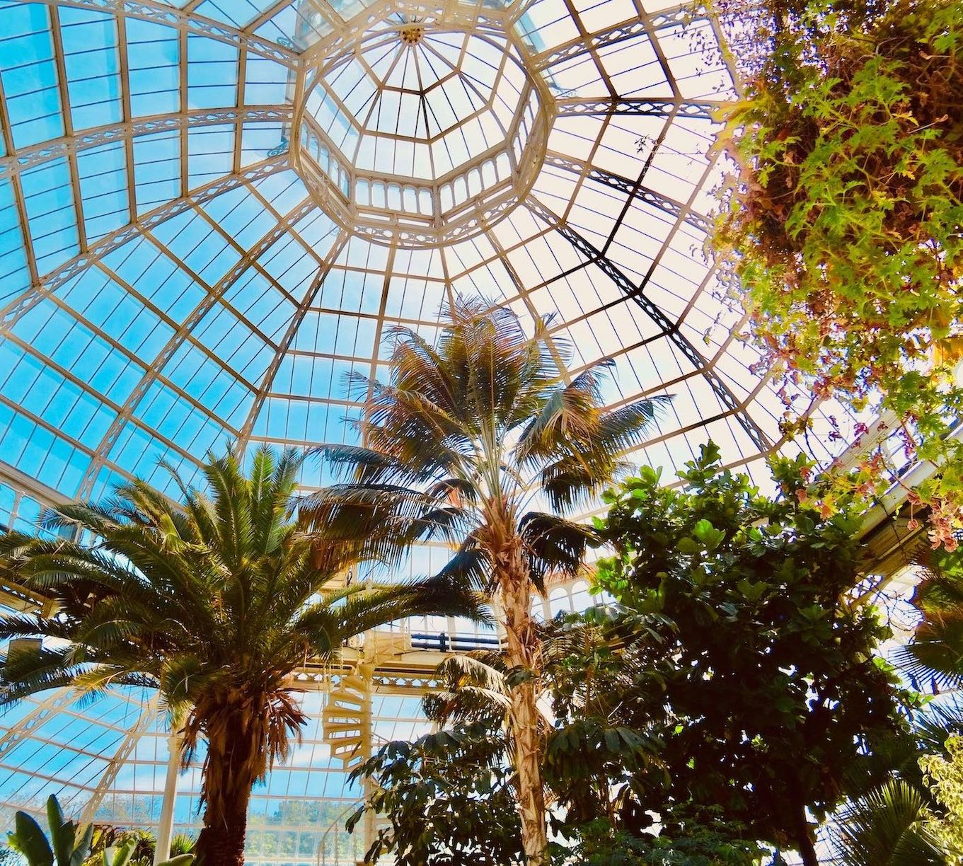 The dome at Palm House Liverpool