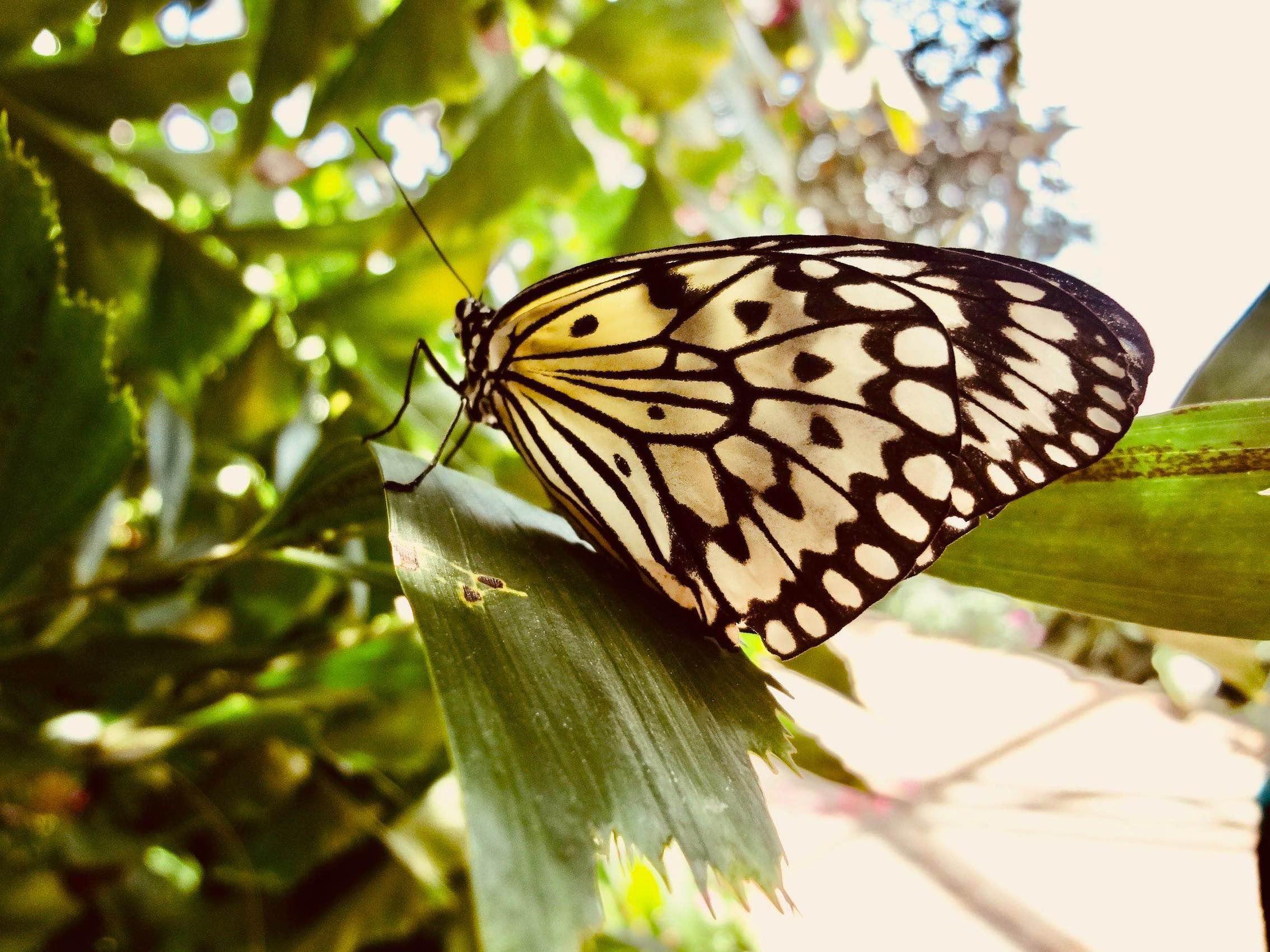 Butterfly Garden Reiman Gardens Iowa.