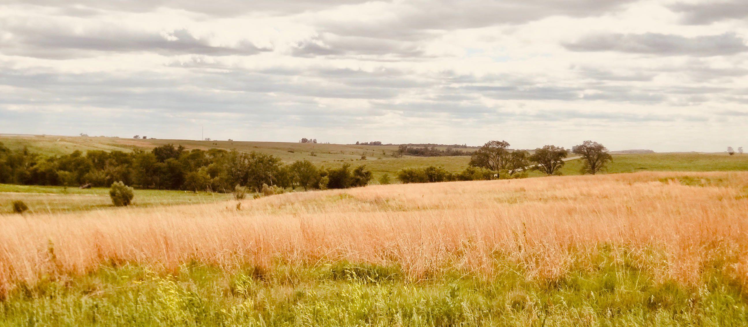 Iowa Nostalgia restored prairie at Neal Smith Wildlife Refuge