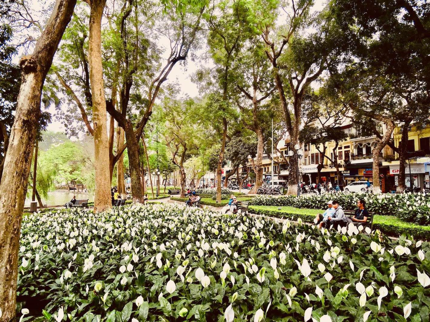 White Calla Lilies Hanoi.