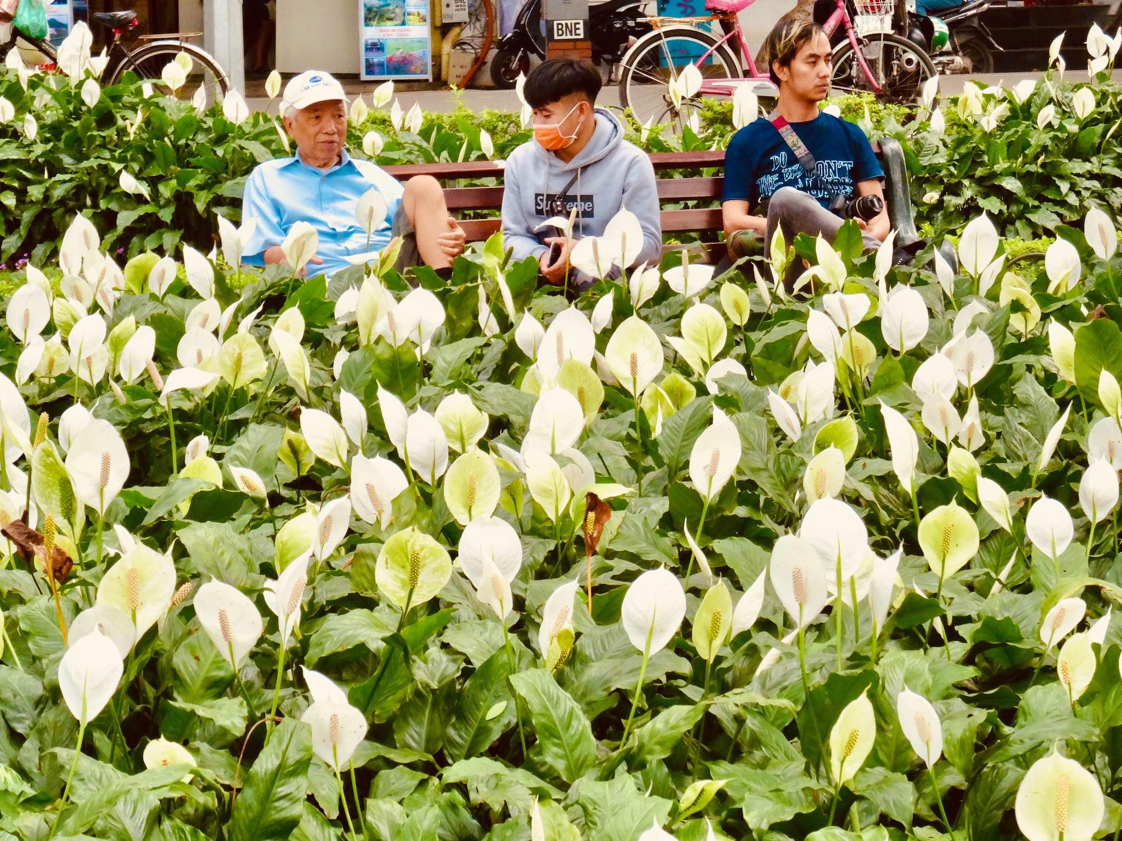White Calla Lilies in Hanoi Vietnam.