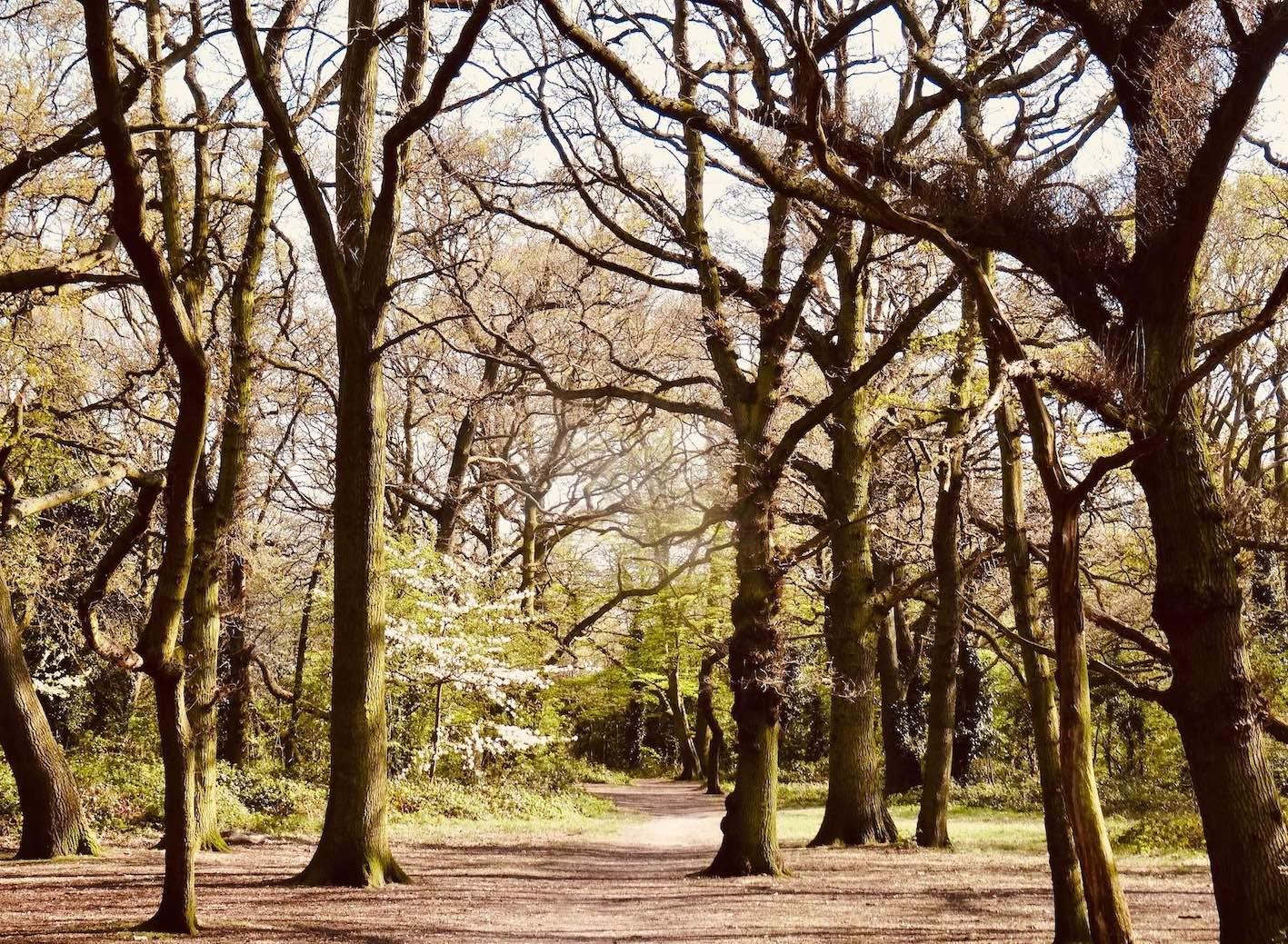 An autumn jog through Tooting Bec Common