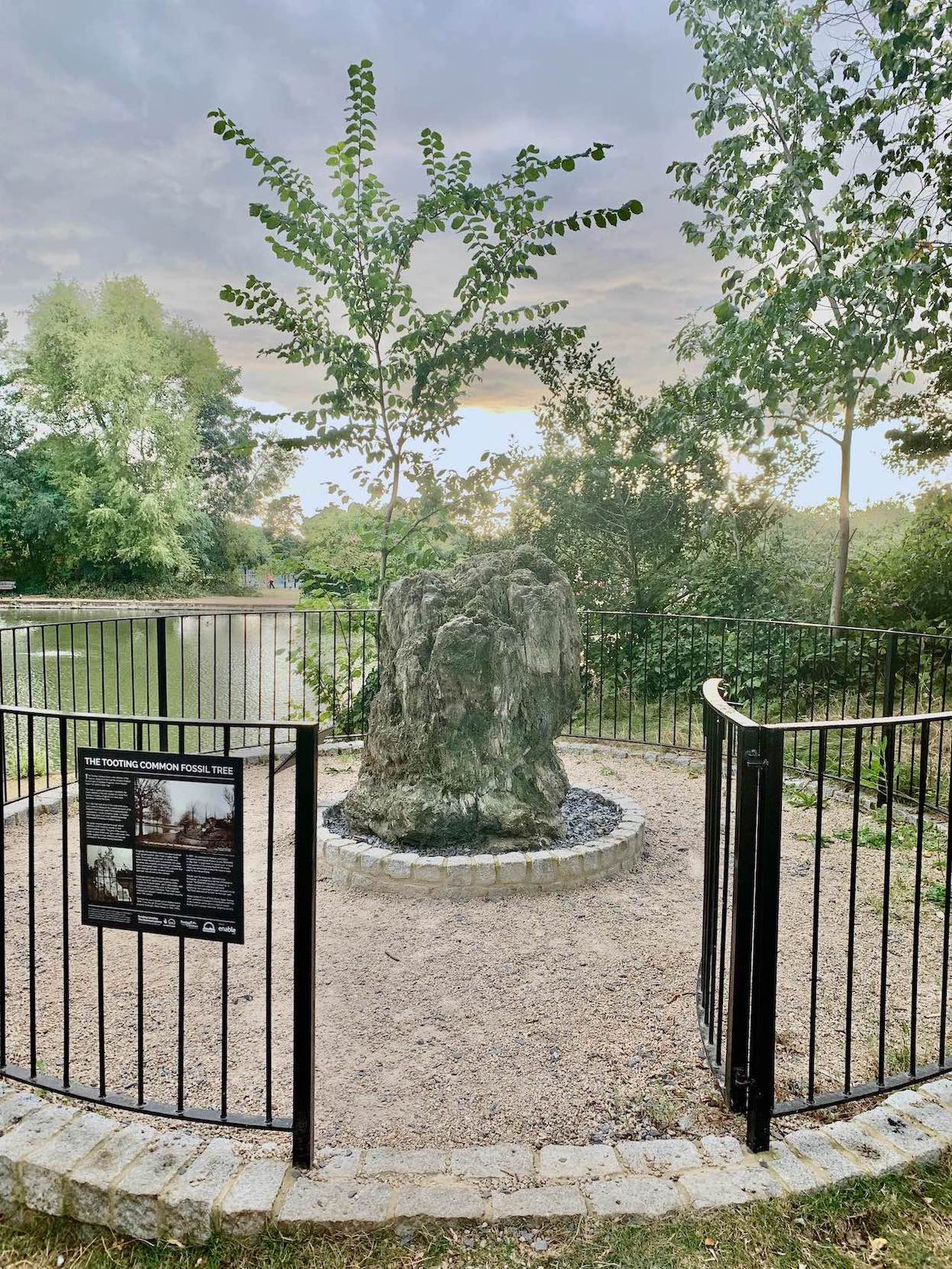 The Tooting Common Fossil Tree.