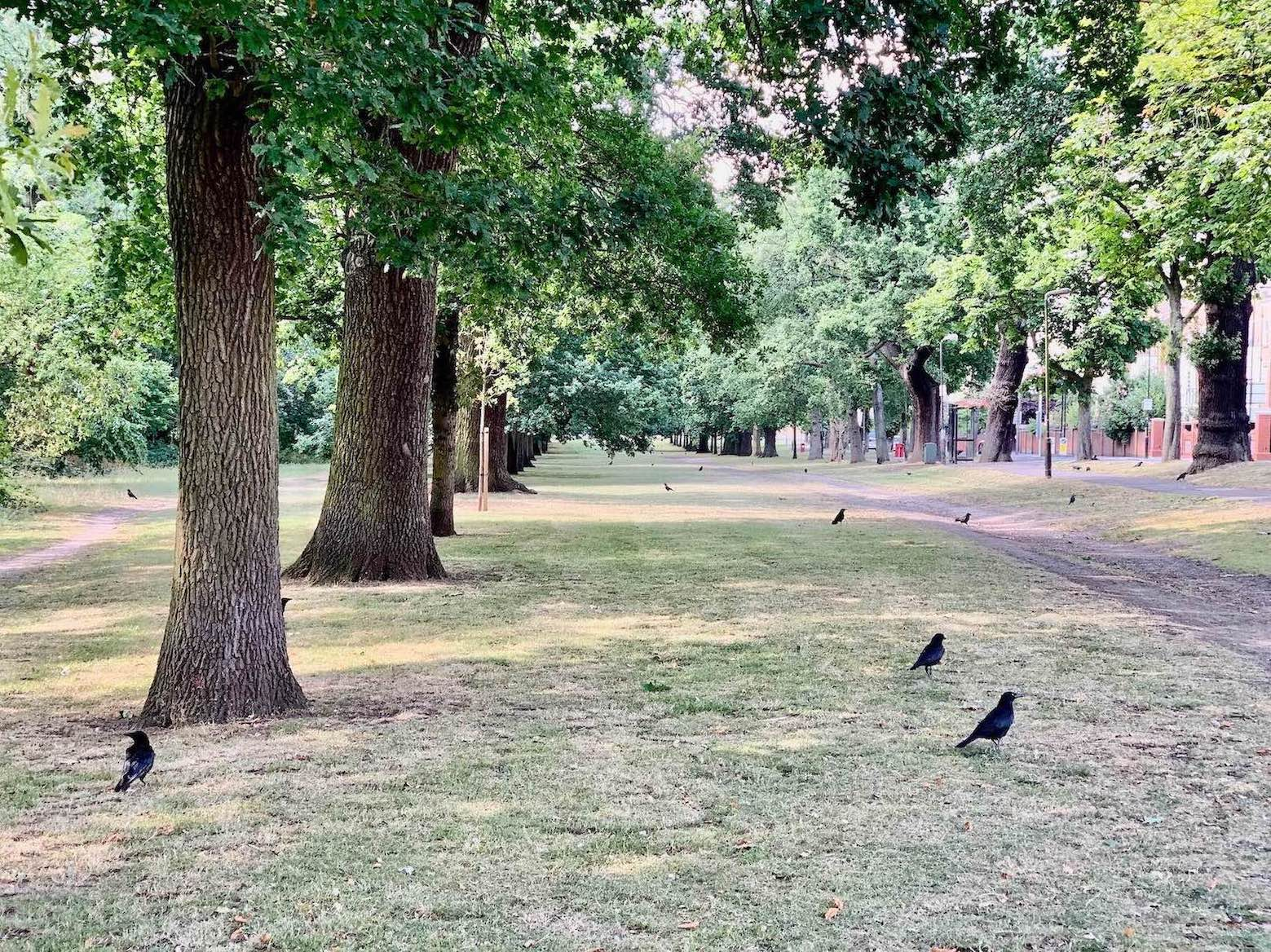 Visit London Tooting Bec Common.