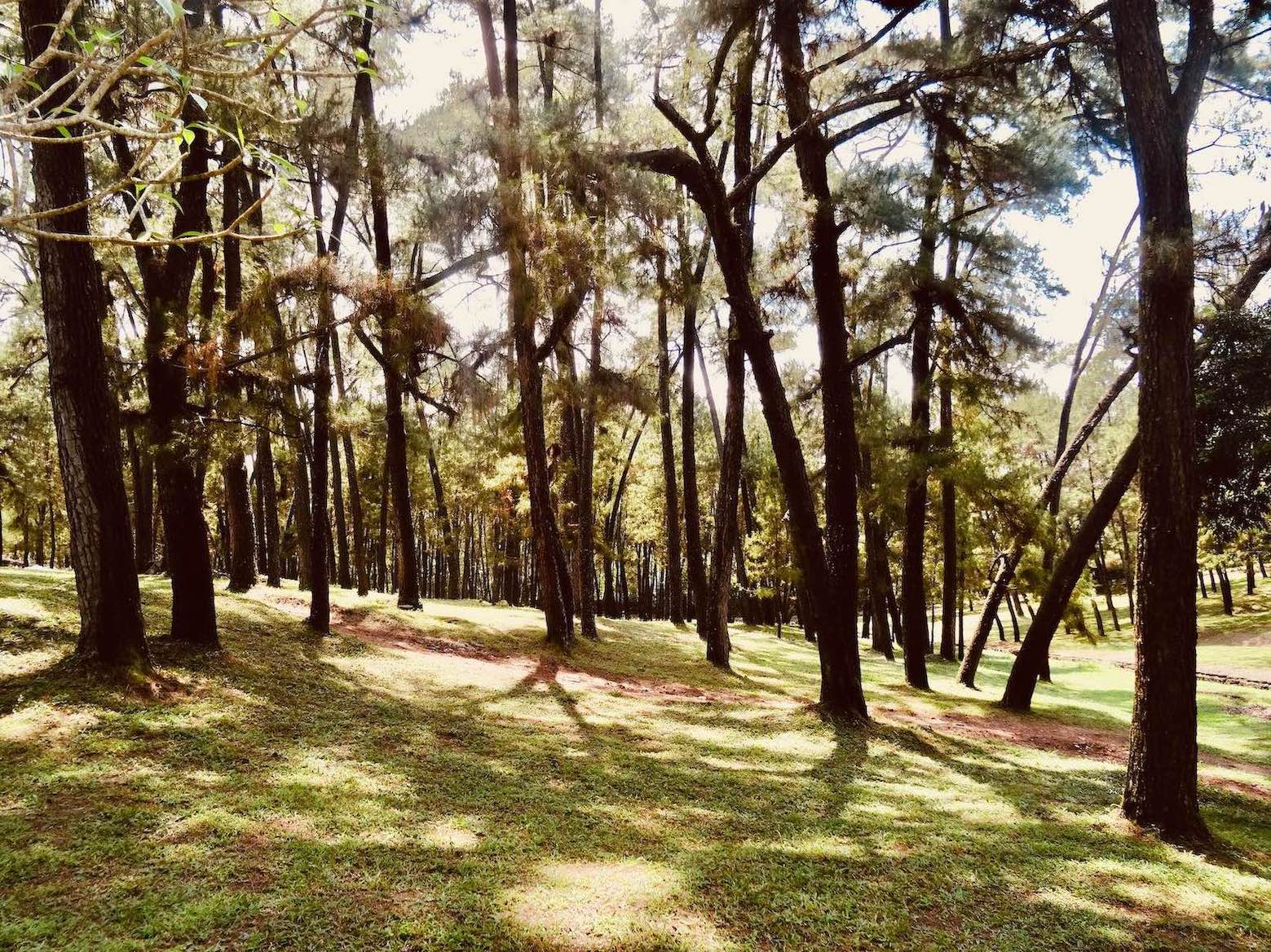 Woodland path Mausoleum of Emperor Tu Duc